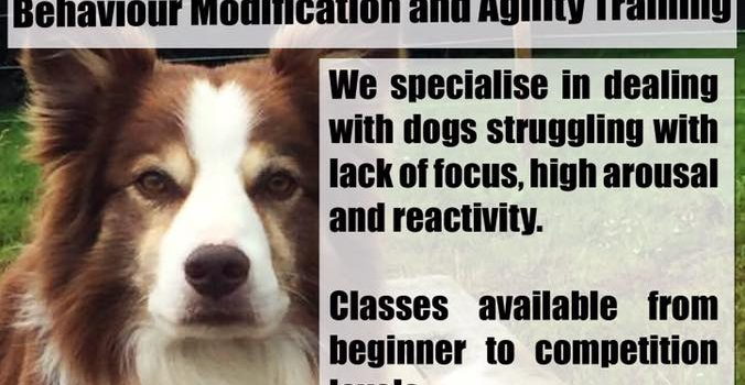 Behaviour Modification and Agility Training
