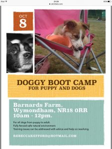 boot camp dog puppy training