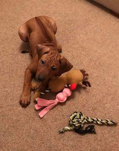 red puppy