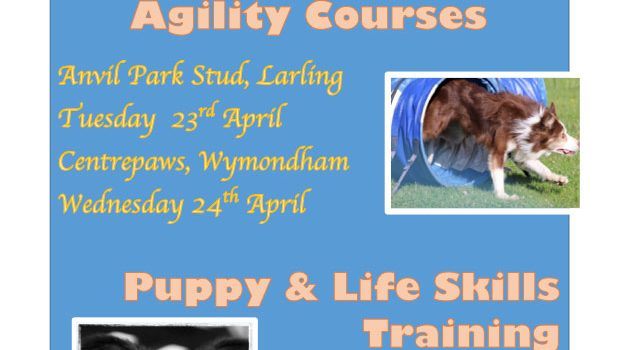 New Beginners Dog Agility Courses