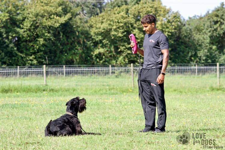 Craig Ogilvie dog body language seminar Norfolk