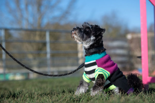 Dog training classes Norfolk